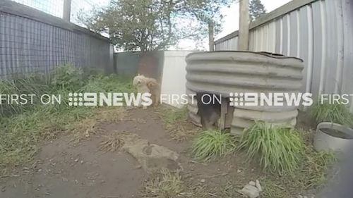 The farm in Uralla, New England, will be hit with charges from the RSPCA.