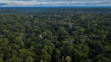 Brazilian authorities are investigating after dozens of gold miners allegedly invaded a remote indigenous reserve in the Amazon, where a local leader was stabbed to death.