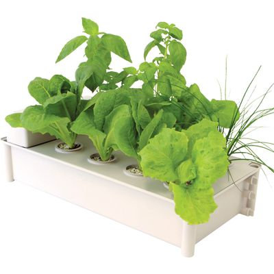 "Salad Green Grower Kit, $50, <a href=""http://www.greengardenshop.com.au/products/29-salad-green-grower-kit?gclid=CIPrlLqK_9ACFQqkvQodZq8BWQ"" target=""_blank"">Green Garden Shop</a>"