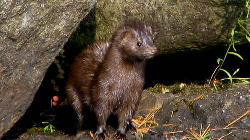 Animal activist pair facing 10 years in prison after freeing 6,000 minks
