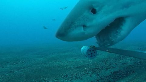 Inquisitive shark 'plays' with underwater camera