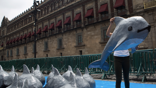 A young woman with the World Wildlife Fund carries a papier mache replica of the critically endangered porpoise known as the vaquita marina, during an event in front of the National Palace in Mexico City. (AP Photo/Rebecca Blackwell, File)