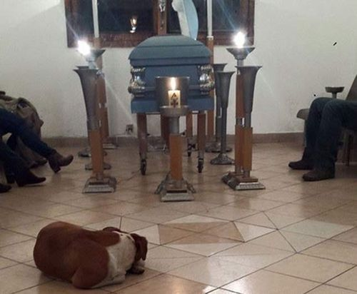 Stray dogs turn up at funeral of Mexican woman who fed them