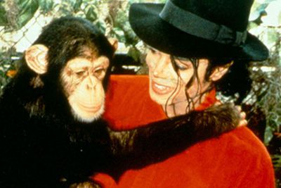 Michael Jackson's chimpanzee Bubbles once had his own nanny. These days he lives at an animal sanctuary after MJ had to give him up when he became agressive.