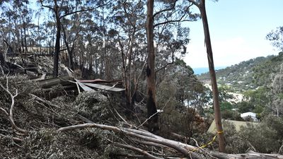The 2200-hectare Jamieson Track fire started with a lightning strike on December 19. (AAP)