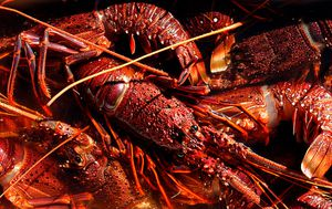 Concern Australian lobster exports caught up in China trade tensions