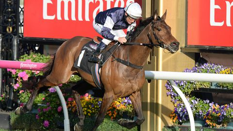 Almandin remains favourite for the Melbourne Cup.