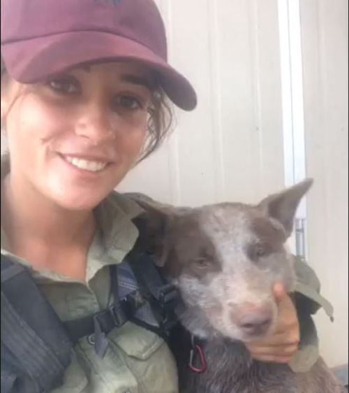 A young NSW woman has been reunited with her 'best friend' cattle dog in rural Western Australia after an arduous five-day search.