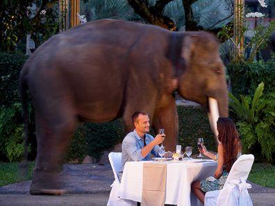Elephant safari dinner, Bali