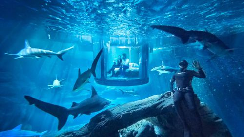 Bedroom suspended in shark tank named world's first underwater Airbnb
