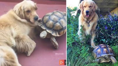 Rescue tortoise and family dog are best mates