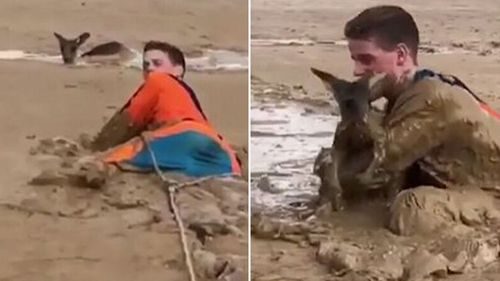 Nick had to crawl commando-style through the mud flats to reach the unlucky animal. (Supplied)