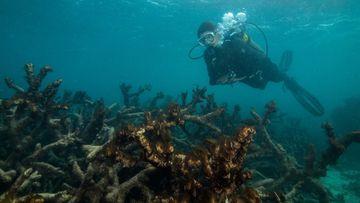 Corals near Lizard Island. (XL Catlin Seaview Survey)