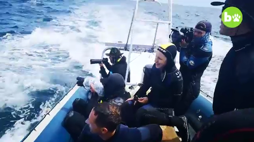 Fellow divers on a nearby boat were able to capture the extraordinary encounter.