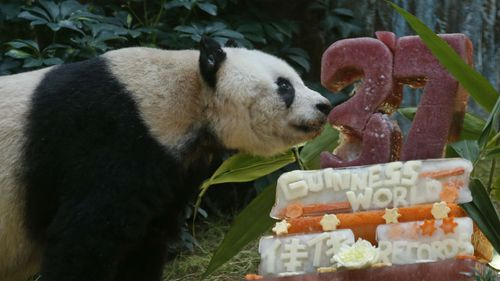 Giant panda Jia Jia celebrates 37th birthday in Hong Kong