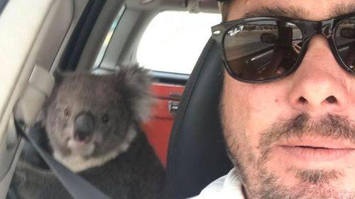 Tim Whitrow filmed his encounter with the koala.