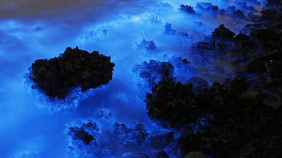 <p>An algae-like bloom is turning Hong Kong's coast a brilliant fluorescent blue - but it's potentially harmful.</p><p>  The glow is indicative of Noctiluca scintillans, or Sea Sparkle, as it is more commonly known. (All photos from AAP) </p><p> </p>