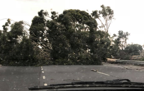 A massive tree has fallen on Frankston Dandenong Road in Seaford. (Facebook)