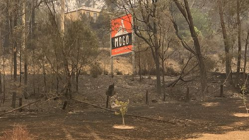 Mogo Wildlife Park came under threat from fires but thanks to the efforts of staff, the animals were saved.