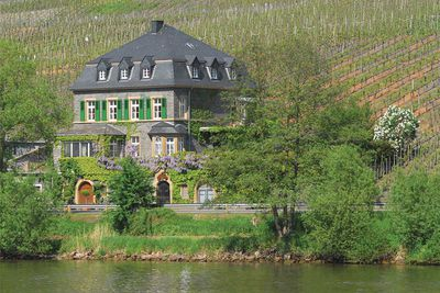 10. Weingut Dr. Loosen, Germany