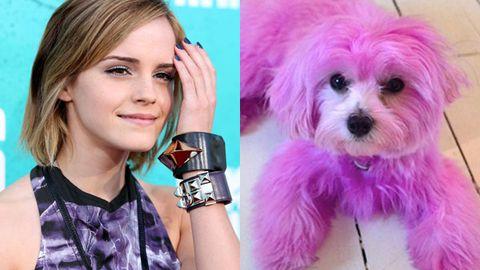Pink Pooch Emma?