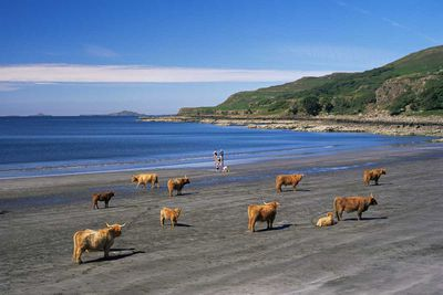 <strong>Best Scottish island for wildlife watching... Isle of Mull</strong>