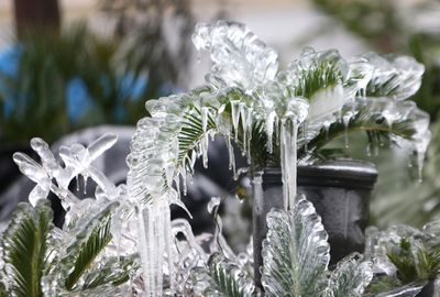 Ice covers plants in Panama City, Florida.