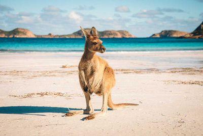<strong>10. Australia</strong>