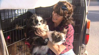 Dog breeder takes RSPCA to court after 19 Pomeranians seized