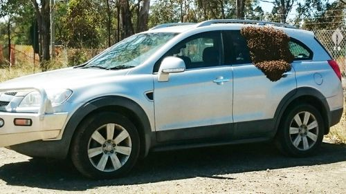 Sydney mum finds car covered in thousands of bees