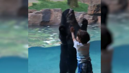 When Ian starting jumping up and down against the glass enclosure, Luka the bear the followed suit. Picture: Facebook