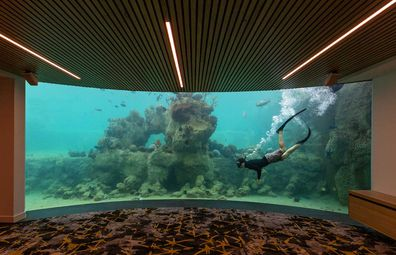Daydream Island's new subterranean Underwater Observatory looks into the Living Reef tank.