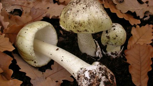 Wild mushroom poison spike prompts warning