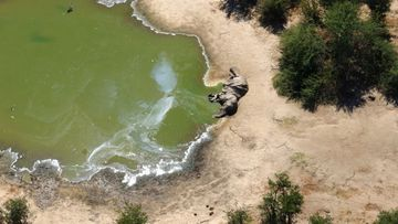 It's now believed the animals drank water contaminated by a toxic algae bloom.