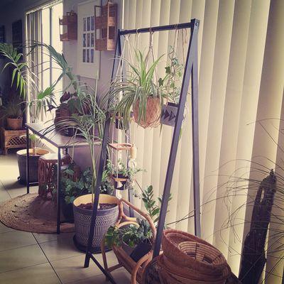 How to create an indoor hanging garden -- Kmart style