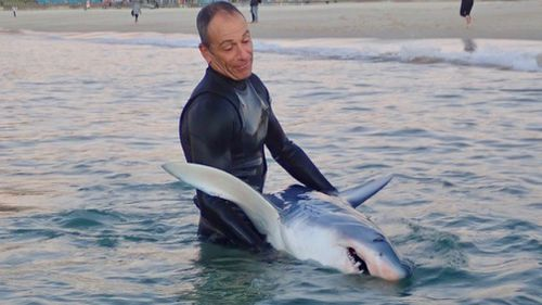 It is believed the shark first washed up last night, when NSW Police were called around 11pm, but then was ashed back into the water and dragged out again today. Picture: Supplied.