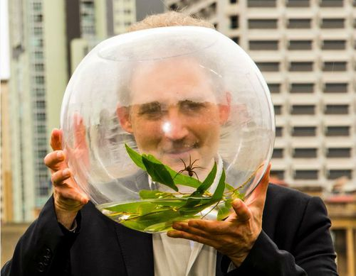 The new species of spider can swim and catch fish.  (Supplied/ Queensland Museum)