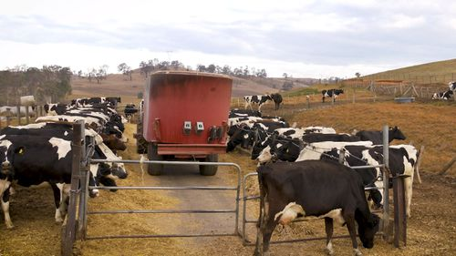 NSW farmer Gavin Moore, said it costs almost 4c more to produce a pint of milk than last year, so a levy is needed.