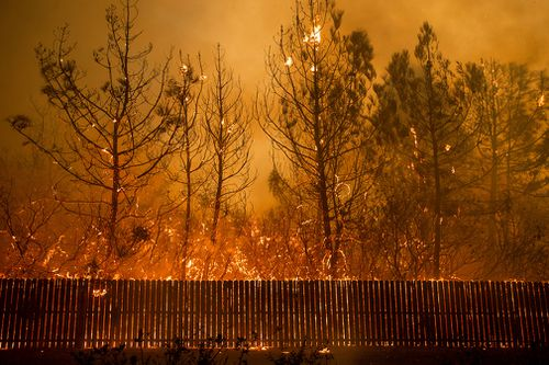 Flames climb trees as the Camp Fire tears through Paradise.