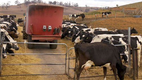 The recent rainfall across NSW and Queensland has brought some relief for feed stock supplies.