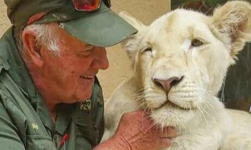 South African conservationist mauled to death by lion he raised