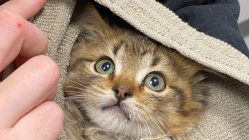 Denver kitten rescued after paws freeze to semi-trailer