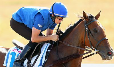 <p>Sky Hunter (GB)</p><p>Jockey William Buick</p><p>Trainer Saeed Bin Suroor</p><p>Barrier 7</p>