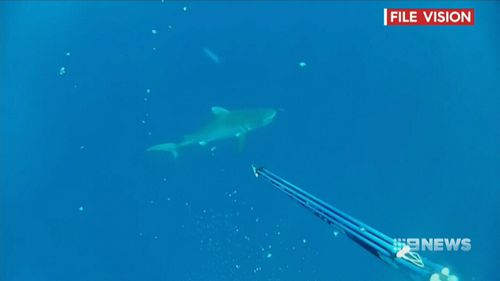 File vision of a shark. (9NEWS)