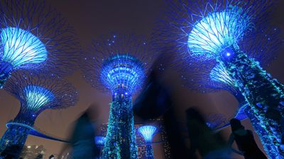 Visitors in at the Singapore gardens walked among the supertrees, lit up in hues of blue for the anniversary. (AAP)