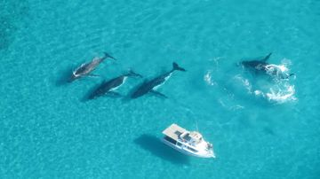 Whales to be tracked off WA coast