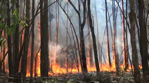 A view of the bushfire from the ground.