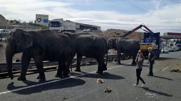 Escaped elephants force closure of Spanish motorway