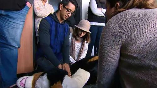 The workshop took place at Port Melbourne's Cat Camp Cattery. (9NEWS)