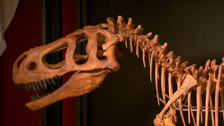 12-year-old Canadian boy discovers rare dinosaur